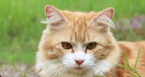 Allergie gegen Katzenfutter