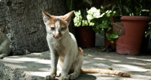 Chronische Niereninsuffizienz bei Katzen