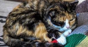 Katzen Allergien und chronische Krankheiten natürlich behandeln