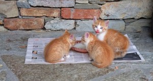 Katzenfutter – nass oder trocken?