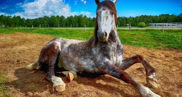 Gesundheitstipps für Pferde im Leistungssport