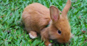 Die richtige Unterbringung für Kaninchen