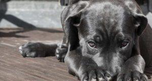 Wie kann ich beim Hund Fieber messen?
