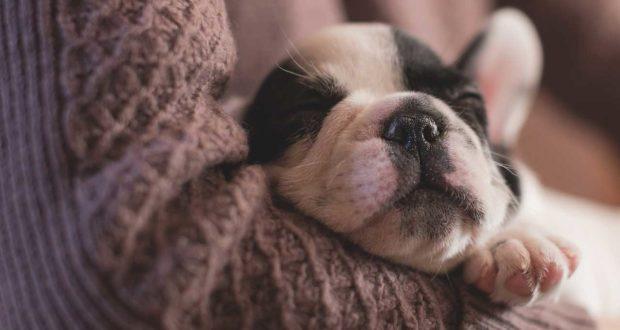Beruhigungsmittel für Hunde - macht das Sinn?