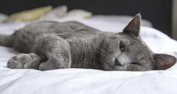 Welches Beruhigungsmittel für Katzen ist am besten?