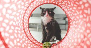 Bestes Katzenspielzeug – von der Plüschmaus bis zum Katzenkarussell
