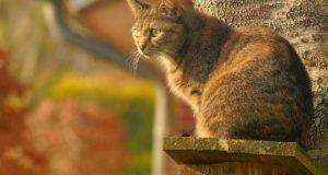 Was ist das optimale Katzenklo?