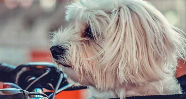 Erziehung mit der Hundebox