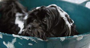 Fellpflege beim Hund