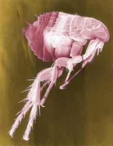 Flöhe und Zecken bei Tieren - Prävention und Behandlung der Plagegeister