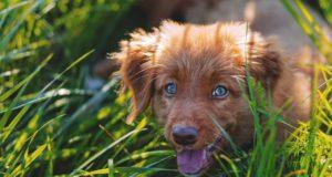 Flohbisse beim Hund – Was sollten Sie tun?