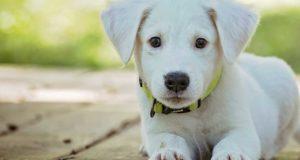 GPS Halsband für Hunde - Unsere Empfehlung