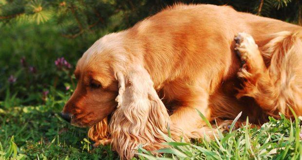 Grasmilbenbefall beim Hund was sollten Sie tun?