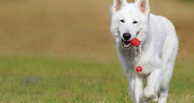 Wie kann ich meinen Hund entwurmen?