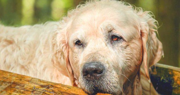 Hund stinkt plötzlich - was tun?