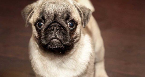 Wie mache ich eine Hunde Wurmkur?