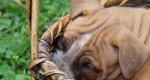 Hundebox bei Amazon