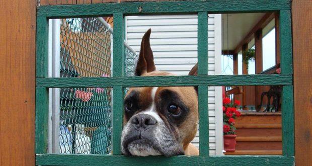 Die Hundebox faltbar und leicht für den Transport
