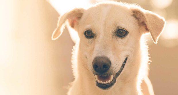 Hundebox Trixie