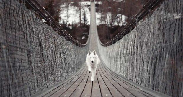 Hundehütten: So finden Sie das passende Modell für Ihren Vierbeiner
