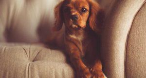 Hundekissen - Stoff und Füllung machen den Unterschied!