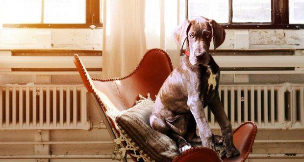 Hundekorb - was ist wichtig?