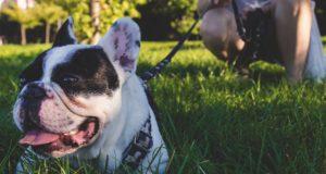 Hundeleinen – was sollten Sie beim Kauf beachten?