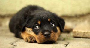 Hundebabys - wichtige Infos rund um Erziehung & Umgang