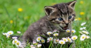 Katze natürlich entwurmen – wie geht das?