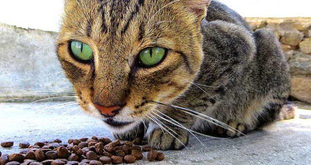 Katzen füttern - 11 wichtige Tipps