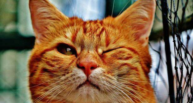 Katzen Gesundheit