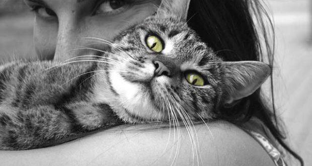 Katzen Haltung - Wohnen mit dem Stubentiger