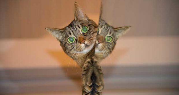 Katzen Parasiten - Endoparasiten