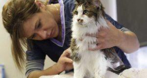 Katzen Pflege - Fellpflege, Krallenpflege und Ohrenpflege