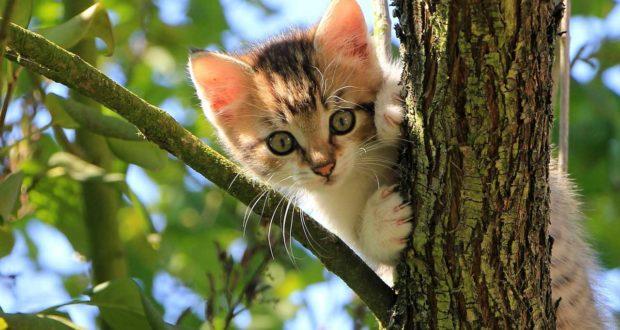 Katzen Wurfkiste - so fühlen sich Katze und Kätzchen wohl