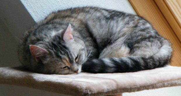 Der Katzenbaum – unverzichtbar für das Tier!