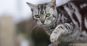 Katzenfutter Test - Was ist gutes Katzenfutter?