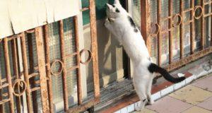Katzenklappe – worauf man achten sollte!
