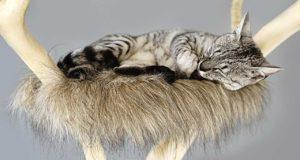 Katzenkratzbäume Top Empfehlungen