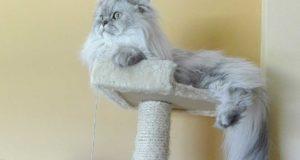 Der Katzenkratzbaum: sinnvolles Beschäftigungsgerät und Rückzugsort für Ihre Katze