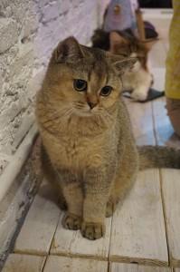 Durchfall und Erbrechen bei Katzen