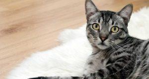Katzenstreu im Katzenklo - so geht's richtig!