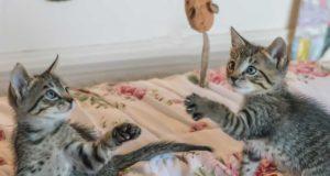 Katzenzubehör - Was braucht man wirklich?