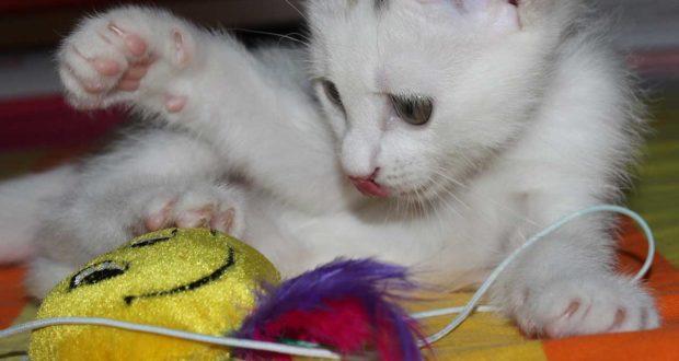 Katzenzubehör – Was braucht man wirklich?