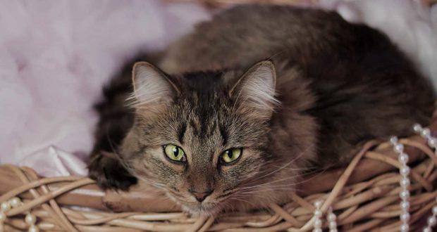 Welcher Katzenkorb ist für meine Katze geeignet?