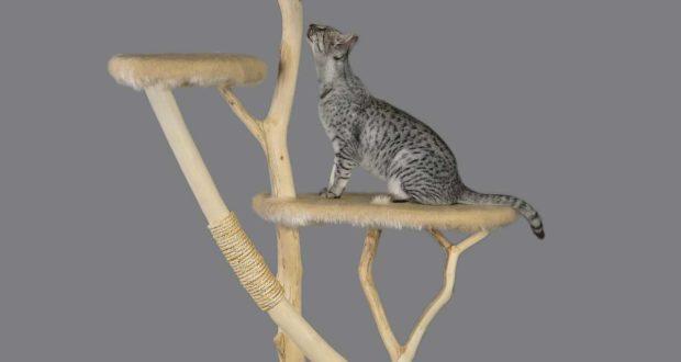 kratzbaum selber machen produkt und preisvergleich. Black Bedroom Furniture Sets. Home Design Ideas