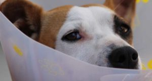 Leckschutz für Hunde - die perfekte Lösung