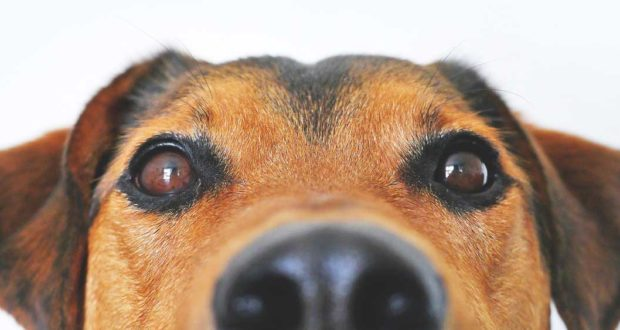 Sind Nahrungsergänzungsmittel für Hunde sinnvoll?