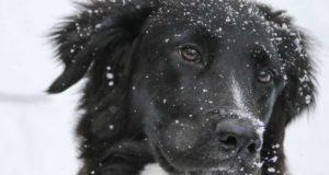 Öl – welches ist geeignet für den Hund?