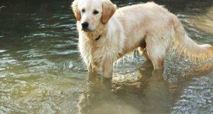Die besten Tipps zur Hundefellpflege!